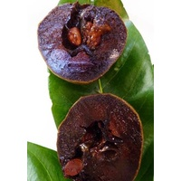 Chocolate Pudding Fruit (Black Sapote)